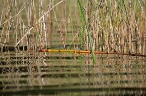 Garden channel wetlands
