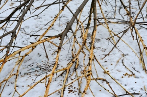 Branches against the snow
