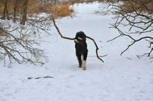 Nelly with big stick