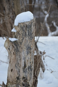 Stump with Snow
